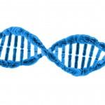 DNA – Deoxyribonucleic Acid